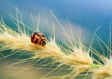 Beautiful Lady Bug. On extreme Macro Stock Photo