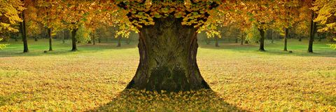 Beautiful, lady of colour autumn Stock Photography