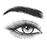 Beautiful lady eye sketch Royalty Free Stock Images