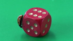 Beautiful lady luck – ladybug ladybird on red game dice with number six stock video footage