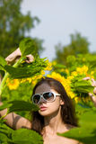 Beautiful lady in a sunflower field Royalty Free Stock Images
