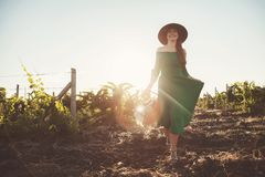 A beautiful lady walks in a field of vineyards. stock photo
