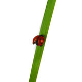 Beautiful ladybug Stock Photography