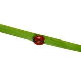 Beautiful ladybug Stock Images