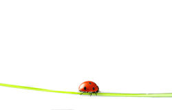 Beautiful ladybug Stock Images