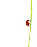 Beautiful ladybug Stock Photo