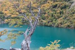 Beautiful Lago del Desierto在Los Glaciares国家公园 库存照片