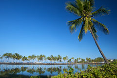 Beautiful laguna with palm trees, blue sky. And reflection, with copy space. This shot was taken in Hawaii at a relaxing spa resort Stock Images