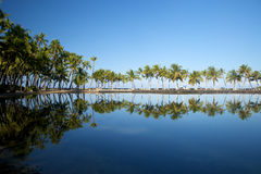 Beautiful laguna with palm trees, blue sky. And reflection, with copy space. This shot was taken in Hawaii at a relaxing spa resort Stock Photography