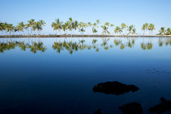 Beautiful laguna with palm trees, blue sky. And reflection, with copy space. This shot was taken in Hawaii at a relaxing spa resort Royalty Free Stock Images