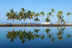 Beautiful laguna with palm trees, blue sky. And reflection, with copy space. This shot was taken in Hawaii at a relaxing spa resort Royalty Free Stock Photo