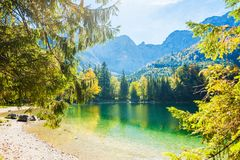 Beautiful lake in the Alps mountains. Green trees on the shore of lake in the Alps mountains. Vorderer Langbathsee lake in Austria Stock Photography