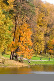 Beautiful lake in autumn park. Stock Images