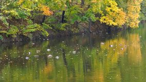 Beautiful lake in the autumn park stock footage