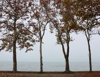 Beautiful Lake Balaton royalty free stock photo