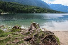 Beautiful Lake Bohinj Royalty Free Stock Images