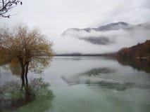 Beautiful Lake Bohinj royalty free stock photography