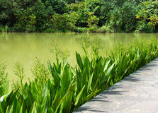 Beautiful lake in the botanical garden Stock Images