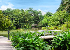 Beautiful lake in the botanical garden Royalty Free Stock Image