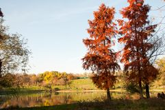 Beautiful autumn trees in Tineretului Park from Bucharest City. Beautiful lake and colorful autumn trees in Tineretului Park from Bucharest City Royalty Free Stock Image