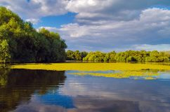 A beautiful lake in Danube Delta, Romania. Discovering Danube Delta in a Canoe. Water channel, river in Danube delta, Romania - Image royalty free stock image
