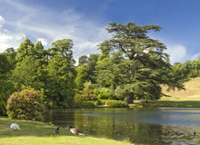 Beautiful lake in English countryside. Lake surrounded by trees inn English park in summer Royalty Free Stock Photos