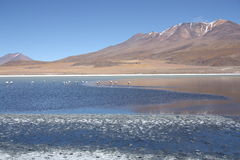 Beautiful lake with flamingos in Bolivian Andes Royalty Free Stock Image