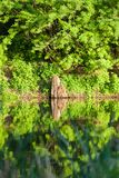 A beautiful lake in the forest with green summer trees around.  Stock Photography