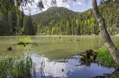 Beautiful lake in forest Stock Photography