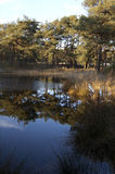 Beautiful lake in the forest Royalty Free Stock Photos