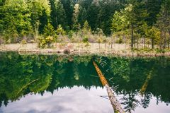Beautiful lake in the forest with reflection in the calm green water stock photography