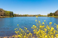 Beautiful lake and forest on sunny spring day with wild flowers Stock Images