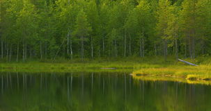 Beautiful lake in the green and lush finnish forest in the morning stock footage