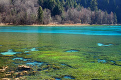 Beautiful lake in jiuzhaigou Royalty Free Stock Image