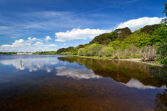 Beautiful lake in Killarney Stock Images