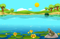 Beautiful lake landscape with frog Stock Photos
