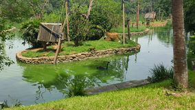 Beautiful lake with monkeys Stock Images