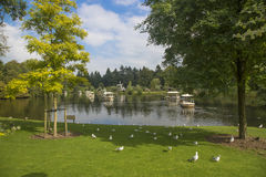 A beautiful lake in the park Royalty Free Stock Photo