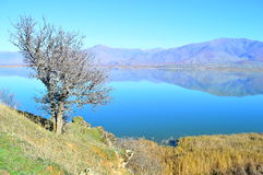Beautiful lake scape. A beautiful lake scape with reflected mountains and a wild pear tree in the small Prespa lake in Greece early in winter Stock Images