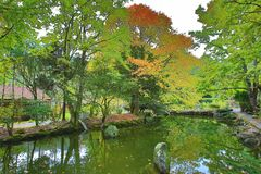 Beautiful lake scenery with maple trees. And path in autumn royalty free stock images