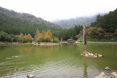 Beautiful lake scenery. With swimming ducks and arbor in autumn Royalty Free Stock Photo