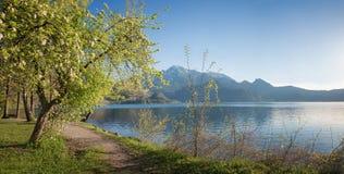 Beautiful lake shore of kochelsee at springtime stock images