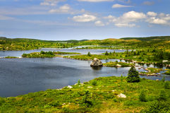 Beautiful lake shore in Newfoundland royalty free stock photos