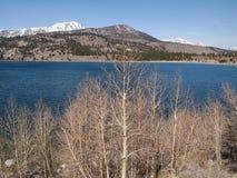 Beautiful lake, snow mountain and pine tree Stock Photo
