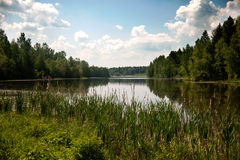 Beautiful lake in the summer Royalty Free Stock Photography