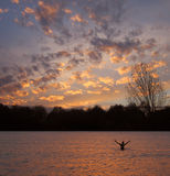 Beautiful Lake Sunset. Man with outstretched arms in beautiful lake at sunset Royalty Free Stock Photos