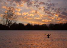 Beautiful Lake Sunset. Man with outstretched arms in beautiful lake at sunset Royalty Free Stock Image