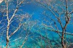 Beautiful lake with tree in jiuzhaigou Stock Photo