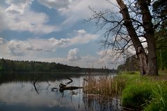 Beautiful lake and trees and forest. Tree root in water with clouds in sky stock photo