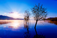 Beautiful lake view in morning fog with mystic mountains and trees as leftovers of a mole in purple - blue tones. Stock Photos
